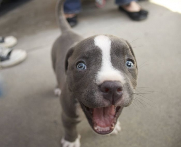 Excited little puppy