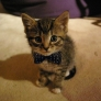 Bow tie kitty