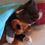 Cat hugs his teddy bear