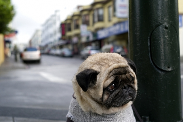 [Image: sad-pug-is-sad.jpg]