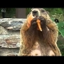 A groundhog eating pizza