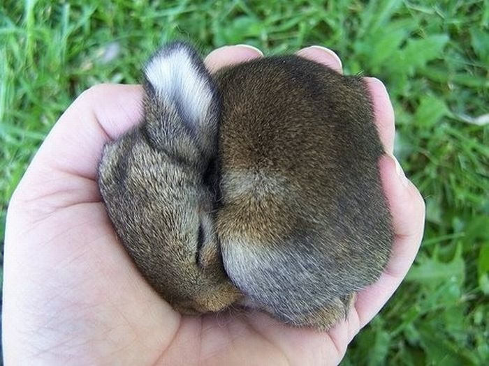 Baby bunny is sleeping - Teh Cute