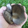 Baby bunny is sleeping