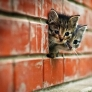 Brick wall kittens