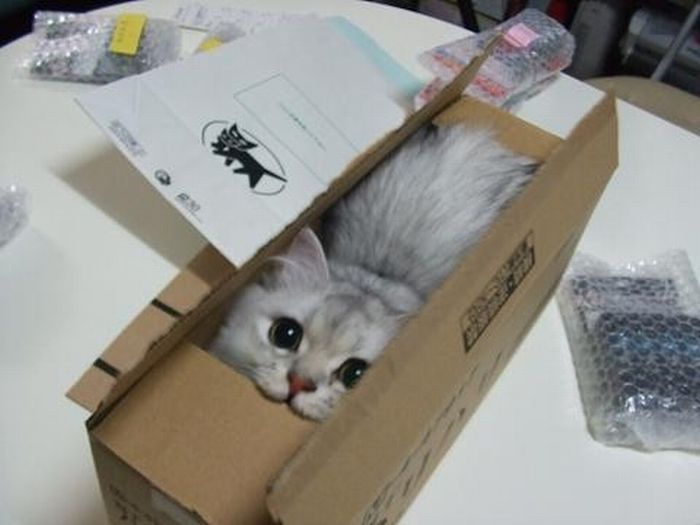 Cat in a box - Teh Cute