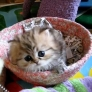 Cute furry kitten