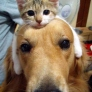 Dog has a cat hat