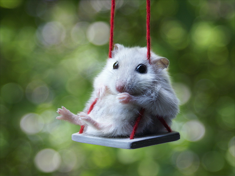 Les communes revisitées ! - Page 3 Hamster-on-a-swing-big