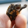 Happy baby turtle is happy