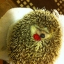 Hedgehog holding a raspberry