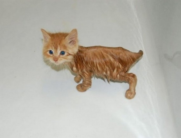 Kitten is soaked