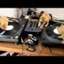 Kittens on decks