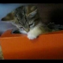 Kitten vs. tissue box