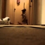 Kittens turn on vacuum cleaner