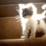 Light kitten