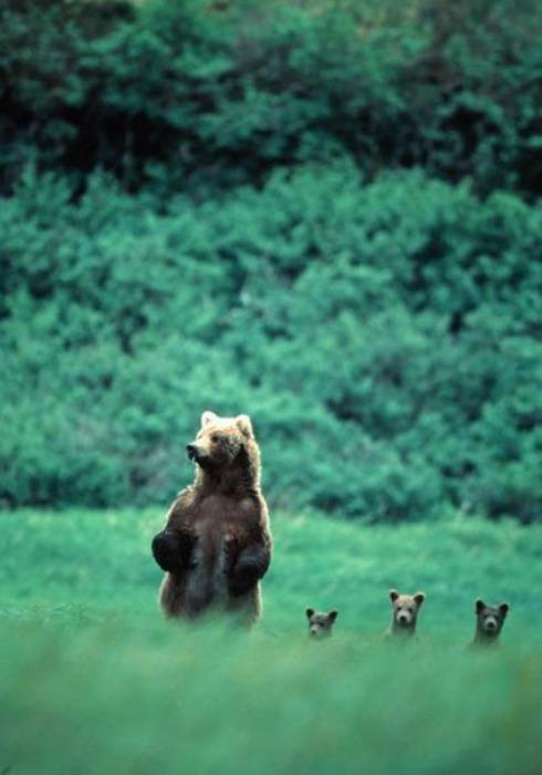 mama-bear-and-the-babies.jpg