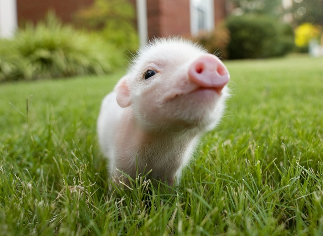 Piglet in the grass