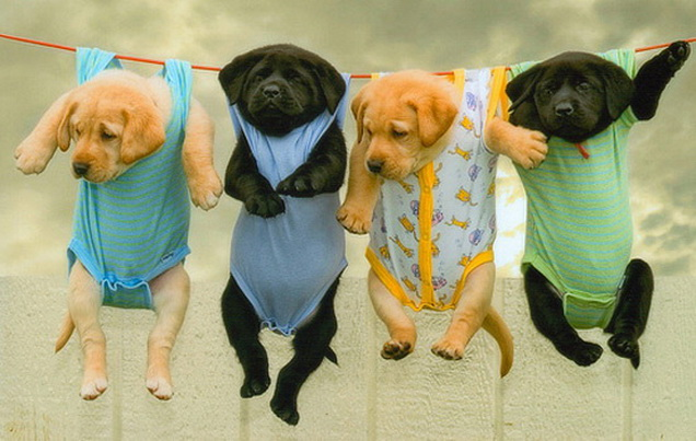http://www.tehcute.com/pics/201109/puppies-hangin.jpg