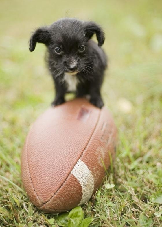 Puppy on a football