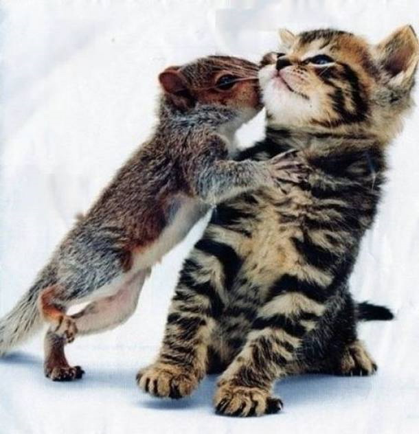 Squirrel kisses kitten