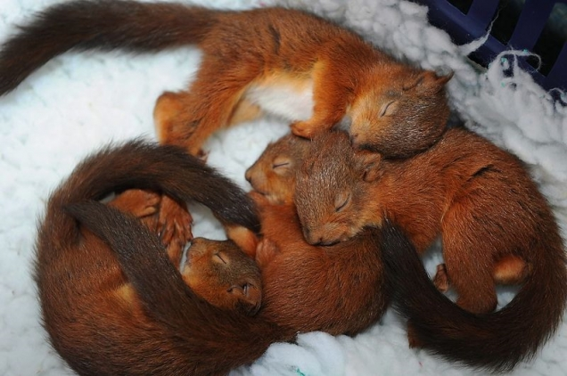 Squirrels sleeping