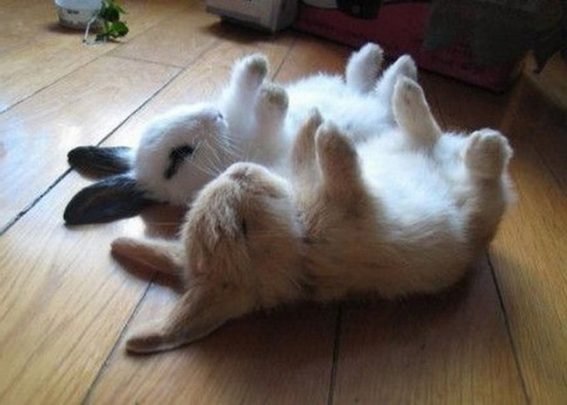 Upside-down bunnies
