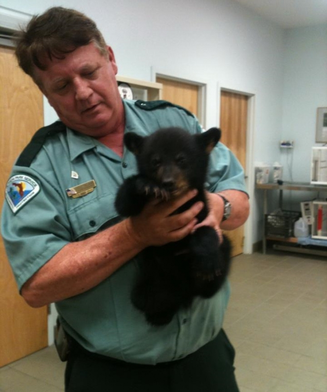 Orphaned bear cub