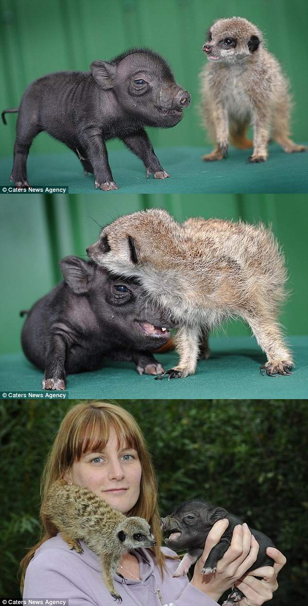 Baby Timon and Pumbaa