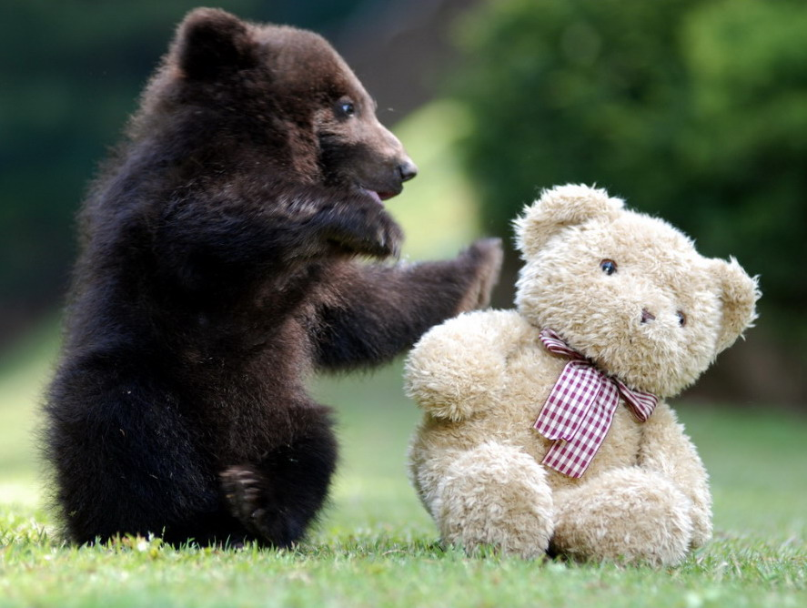 bear-cub-playing-with-teddy-bear-big.jpg