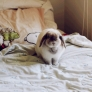 Bunny on the bed