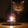 Cat experiments with fire