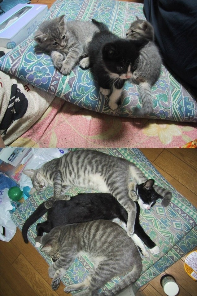 Cats - then and now
