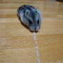Hamster vaccum cleaner