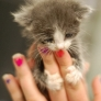 Kitten holding on to fingers