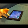 Kitten plays with with fish on an iPad