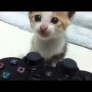 Kitten vs. PlayStation controller