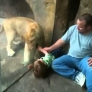 Lion cub plays with kid