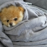 Puppy is cosy in blanket