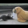 Baby otter playing with plush walrus