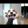 Beagle vs. leaf blower