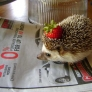 Hedgehog with a strawberry hat