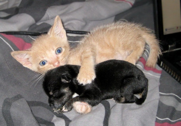 Images of newborn puppies and kittens