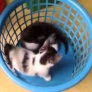 Kittens playing in a basket