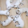 Puppy sleeping circle