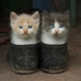 The kittens in the boots