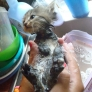 Kitten is having a bath