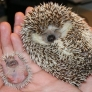 Mama and baby hedgehog