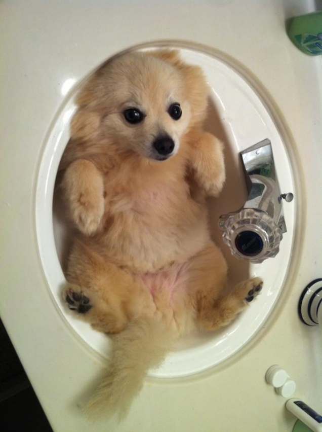 Puppy in a sink