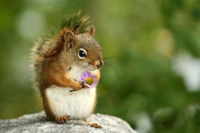 Squirrel holding a flower