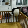 Baby panda's escape attempts